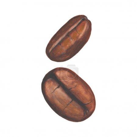 水彩手绘咖啡豆