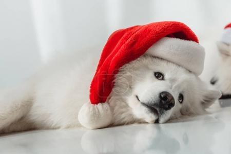 蓬松的狗在圣诞老人帽子